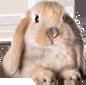 La Petite Fermette Deco-qeel-lapin